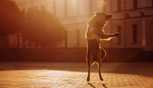 Bailarias conmigo