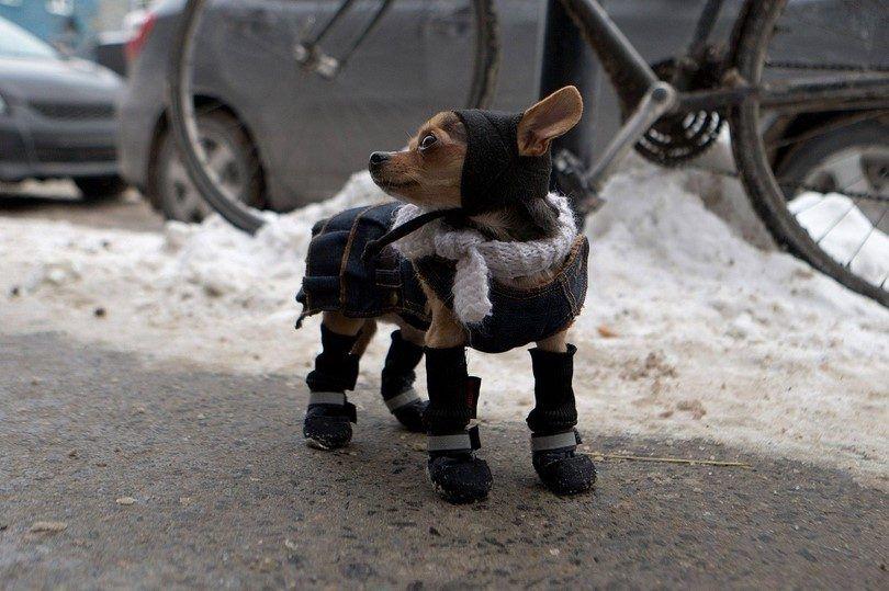 Preparar a su perro para el invierno