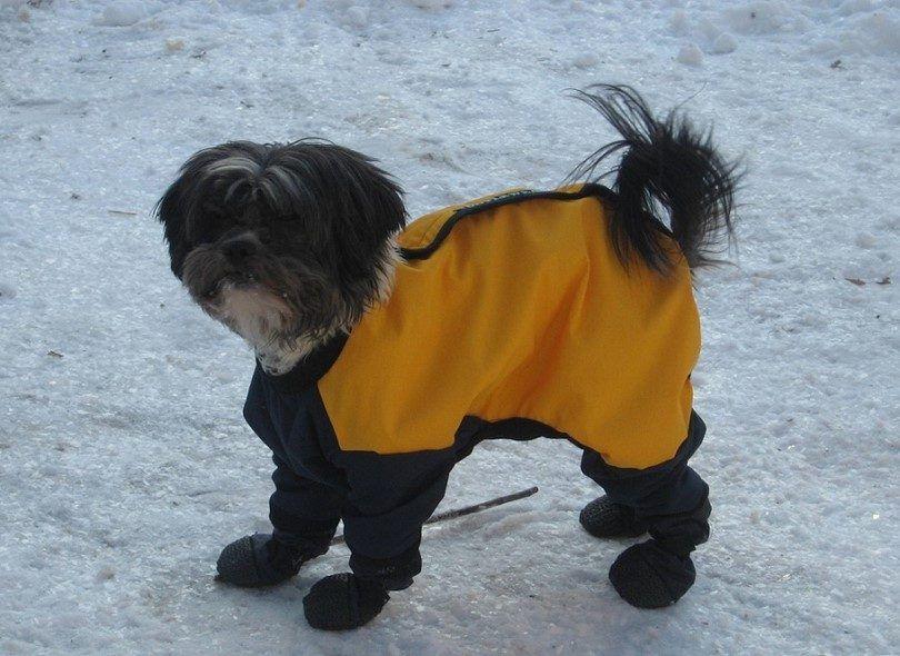 Perro en la chaqueta de invierno