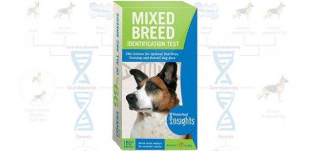 La sabiduría opinión kit de prueba de adn del perro: raza mixta de perros