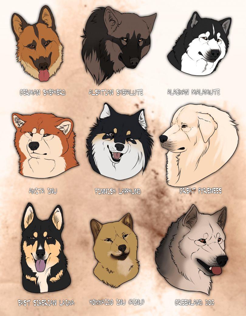 Lobo como las razas de perros: la búsqueda de la herencia ancestral de su perro