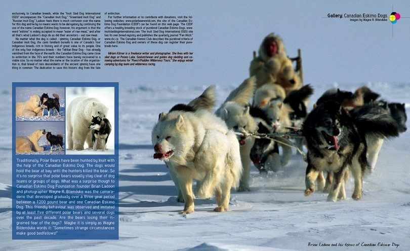 El perro esquimal canadiense