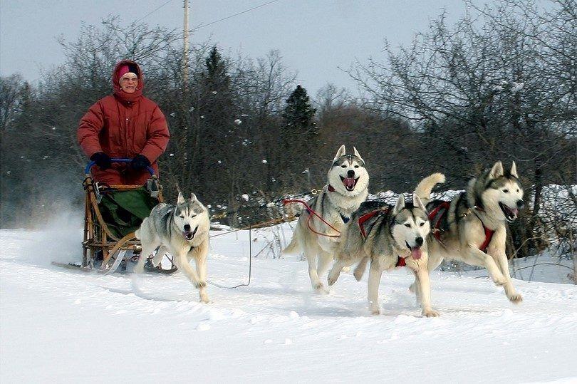 Los perros de trabajo: proveedores de agilidad, fuerza y resistencia