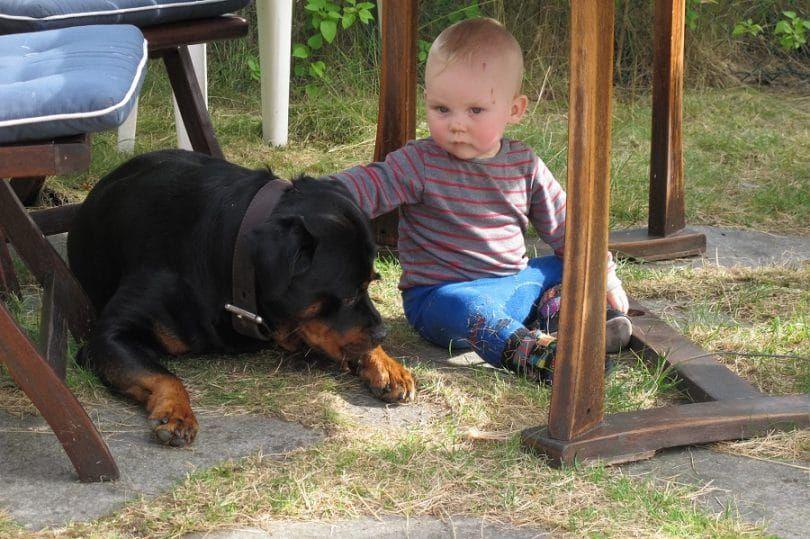 Rottweiler y el bebГ©