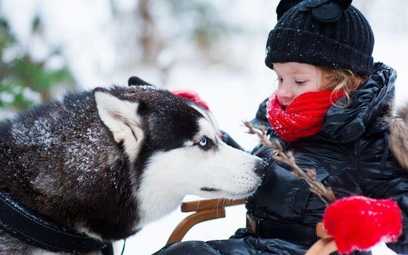Husky siberiano con niГ±o