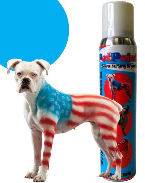 Se puede pintar a su perro con el perro pintura, pero en caso de que