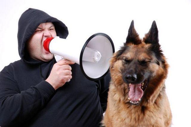 Su perro puede oír!