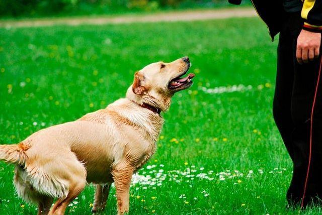 Su perro no hace lo que usted pide? Es hora de establecer objetivos realistas