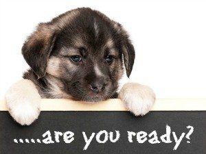 Su nueva lista de verificación del perrito